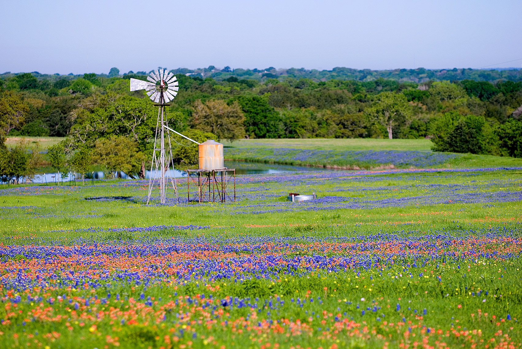 texas-wildflowers-3.JPG